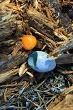 Broken Egg forest birds Royalty Free Stock Photo