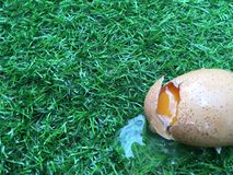 Broken egg on grass field. Like when you are loss something without any preparation of insurance stock photos