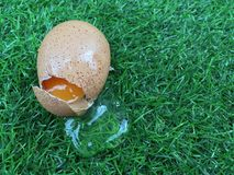 Broken egg on grass field. Like when you are loss something without any preparation of insurance stock images