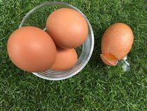 Broken egg on grass field from their container, basket or position. Broken egg on grass field like when you are loss something without any preparation of Stock Photography
