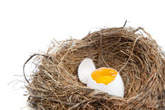 Broken Egg in Nest Stock Images