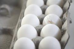 Broken Egg. One cracked egg in carton Stock Photos