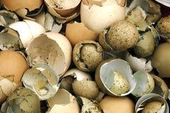 Broken egg shells Royalty Free Stock Photography
