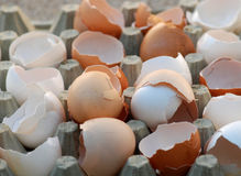 Broken egg shells Stock Image