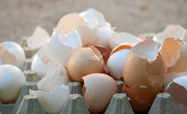 Broken egg shells Royalty Free Stock Photography