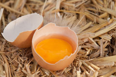 Broken egg on straw Stock Photo