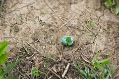 Broken egg of thrush bird on the ground. Thrushes are plump, soft-plumaged, small to medium-sized birds, inhabiting wooded areas, and often feeding on the ground royalty free stock image