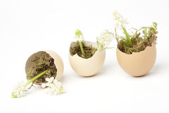 Broken eggs filled with grape hyacinths Stock Images