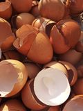 Egg shells stock photography