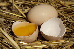 Broken eggs Royalty Free Stock Images