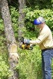 broken för cutting tree ner royaltyfria bilder