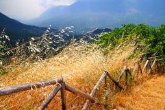 Broken Fence Stock Photos