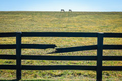 Broken Fences. Two white horses in pasture with a broken wooden fence stock photos