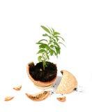 Broken flowerpot Stock Image