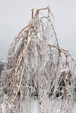broken frysa regnstormtree Fotografering för Bildbyråer