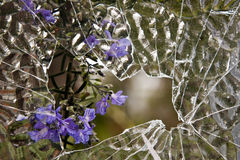 Through the broken glass. Looking through the broken glass of a window with a rosemary plant visible on the other side Royalty Free Stock Photo