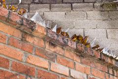 Broken glass bottles on top of brick wall. Broken glass bottles used as security on top of brown brick wall grey brick behind royalty free stock image