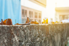 Broken glass on fence ,to protect Stock Image