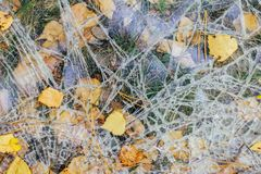 Broken glass lies on the ground with autumn leaves royalty free stock image