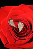 Broken gold heart in a red rose. Ring in a red rose. A jewelry on a blossoming bud of a flower Royalty Free Stock Photos