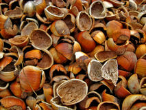 Broken Hazelnut Shells  Royalty Free Stock Photo