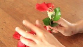 Broken Heart Girl Picking Rose Petals stock video