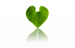 Broken heart leaf Royalty Free Stock Images