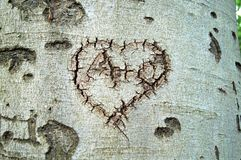 Broken heart. On tree trunk. Inside A + C (O) carved heart Royalty Free Stock Photos