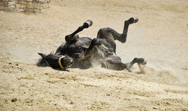 Broken Horse Stock Images