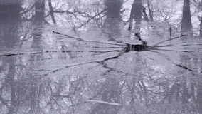 Broken ice recflecting trees Royalty Free Stock Images