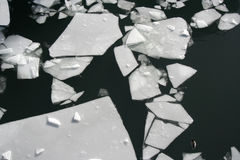Broken Ice Sheet Royalty Free Stock Image