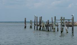 Broken Jetty. On Chincoteague island, USA Stock Images