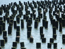 Broken jetty. In the Hudson river new York, providing a rest stop for city bird life Stock Photo