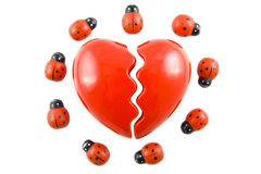 Broken ladybug love Stock Photos