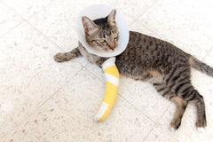 Broken leg splint cat Royalty Free Stock Photos