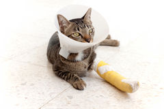 Broken leg splint cat Stock Image