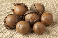 Broken macadamia  nuts Stock Image
