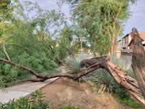 Broken Mesquite Tree Trunk Stock Photos