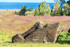 Broken Moai Head. Large head of a broken Moai statue on Easter Island Stock Photography