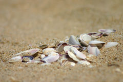 Broken mussels Stock Images