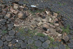 Broken pavement from tree trunks. Stock Images
