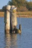 Broken pylon Royalty Free Stock Images