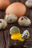 Broken quail egg and chicken one with the leaked yolk Royalty Free Stock Images