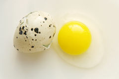 Broken quail egg with shell taken closeup. Royalty Free Stock Images