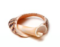 Broken rapana shell on white background Stock Photos