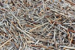 Broken reeds Stock Photography