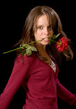 Broken rose Royalty Free Stock Photo