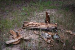 Broken rotten log. Soft focus. Destruction of natural raw wood by the action of time royalty free stock photography