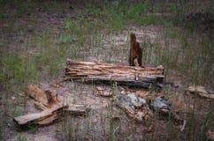 Broken rotten log. Soft focus royalty free stock photography