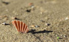 Broken Scallop Shell. Protruding from sand Royalty Free Stock Image